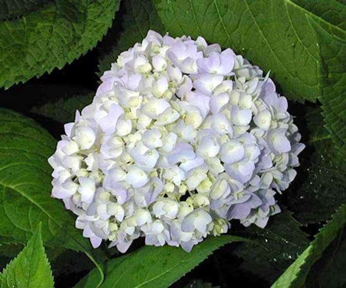 700_05-allsummer-gardenista