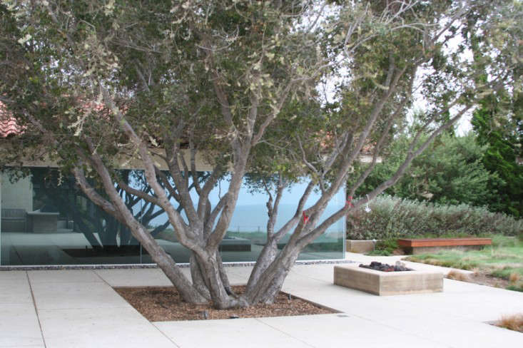 Above: A single large tree in a Palos Verdes, California cliffside estate with landscapes by Orange Street Studio.