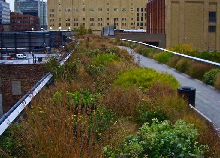 high-line-park-grasses-path-before-hurricane-sandy-jeanne-rostaing