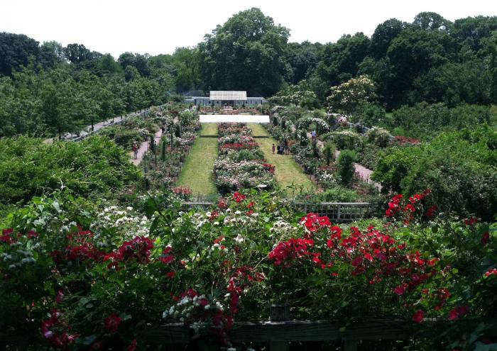 cranford-rose-garden-brooklyn-jeanne-rostaing