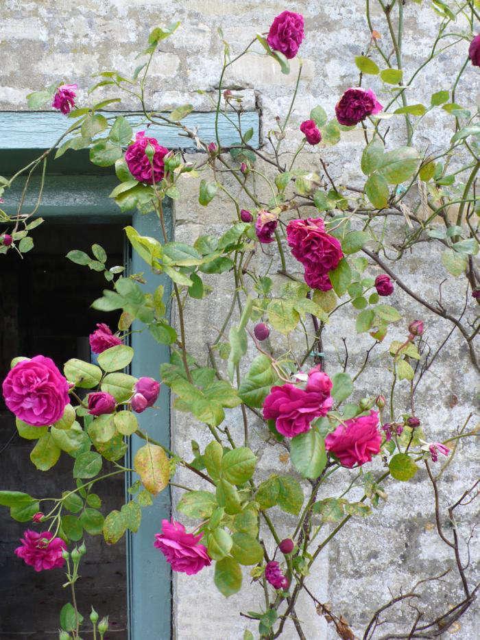 tess-durbevilles-rose-doorway-kendra-wilson