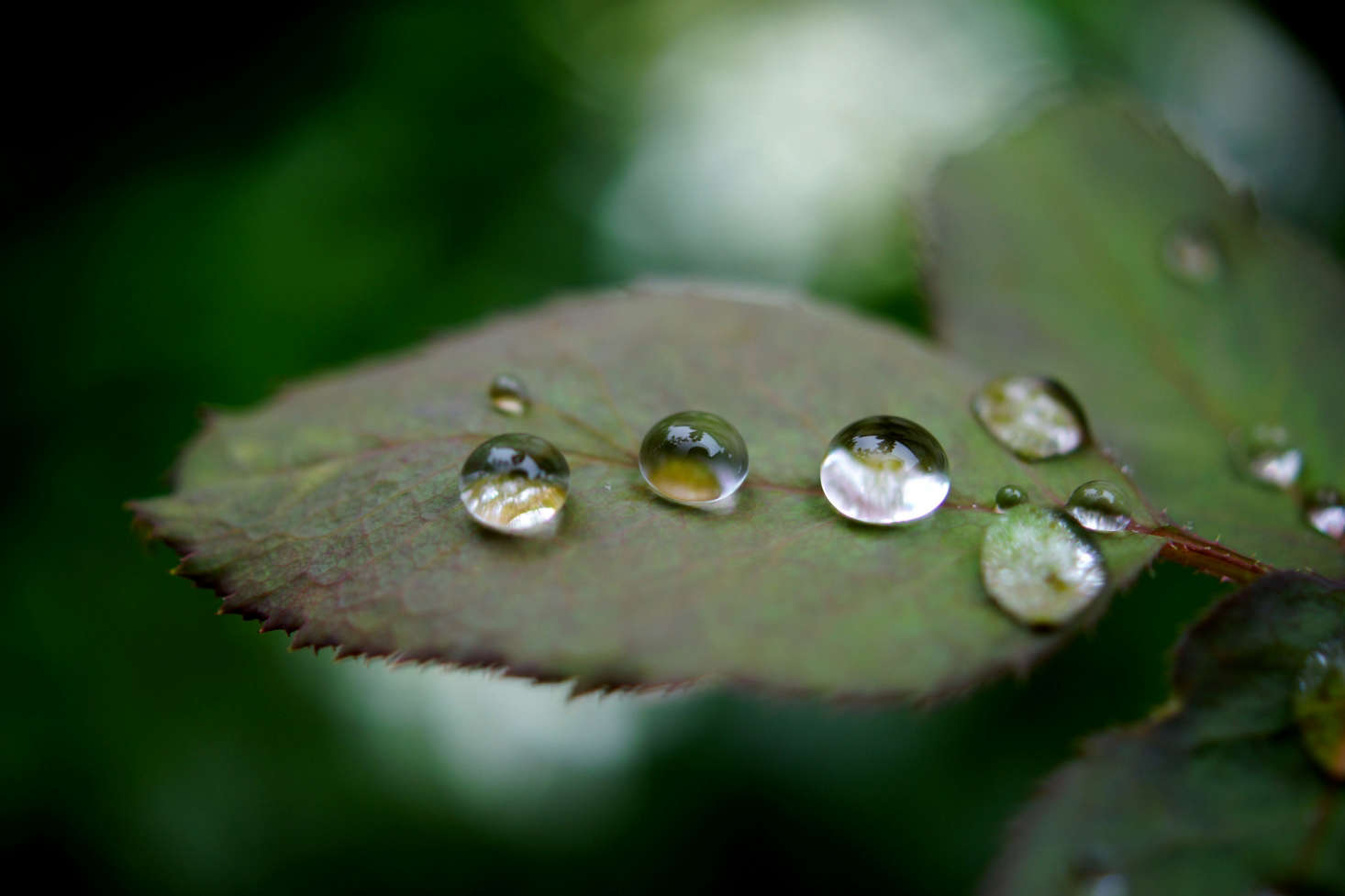 After the rain. Photograph by Takashi M via Flickr.