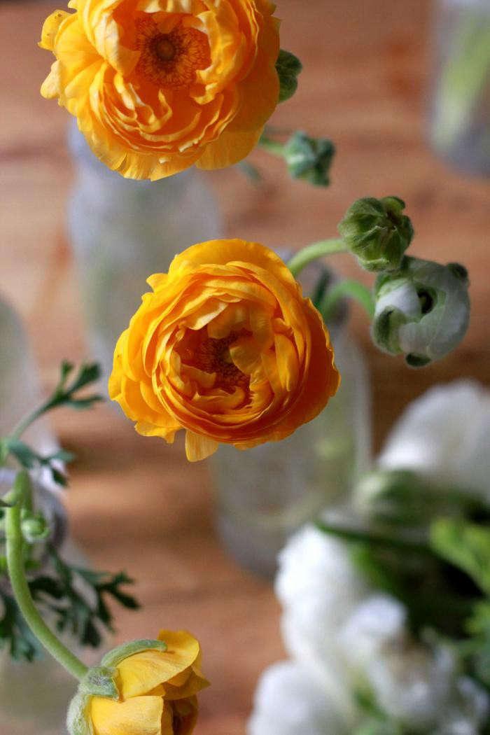 700_orange-ranunculus-gardenista-1