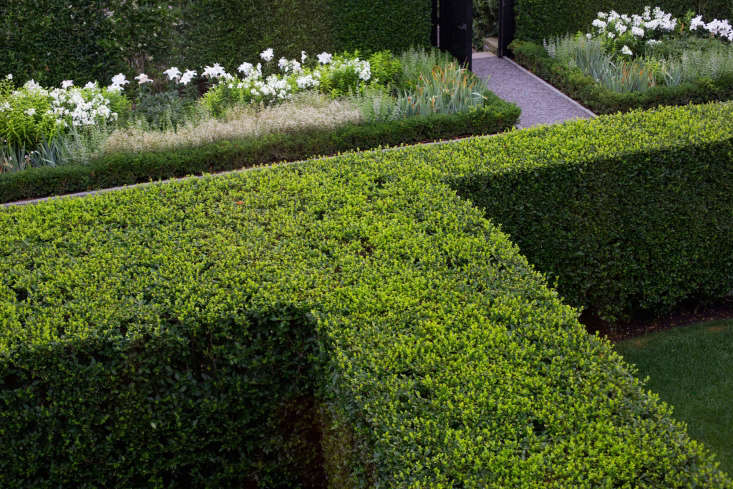 Boxwood hedges Watermill NY garden by Quincy Hammond