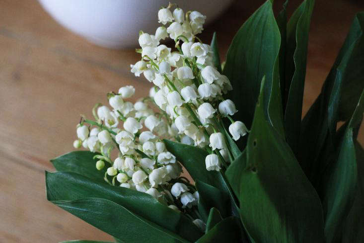 Order Lily of the Valley by the stem; a -stem bunch of Lily of the Valley Flowers is $99.99 (includes free express shipping) from Fifty Flowers.