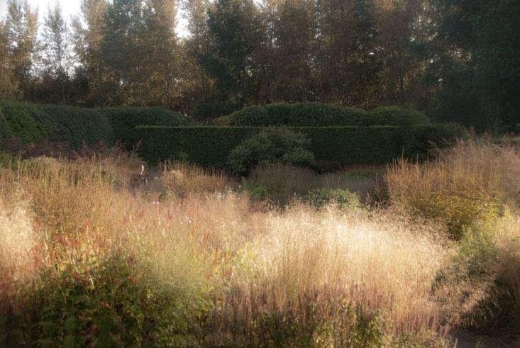 Deschampsia cespitosa in Oudolf&#8\2\17;s own garden in the Netherlands. Photograph courtesy of My Garden School. For more see Garden Design: Learning to Plant the Piet Oudolf Way.