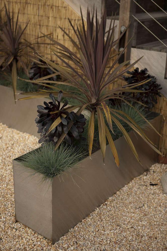 panter-cordyline-aeonium-fescue-grasses-succulents-gardenista