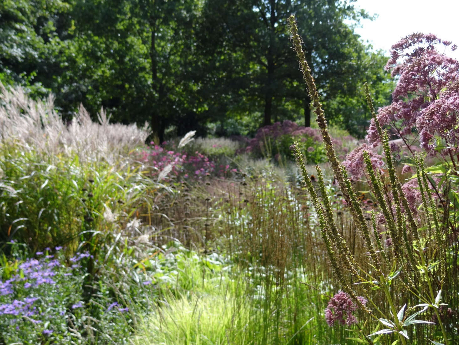 In Hamm, Germany,Maximilianpark was formerly a coal mine, now transformed into gardens, play spaces, and a sanctuary for pollinators. Oudolf designed this sweep of wildflower meadow. Photograph by Esther Westerveld via Flickr.