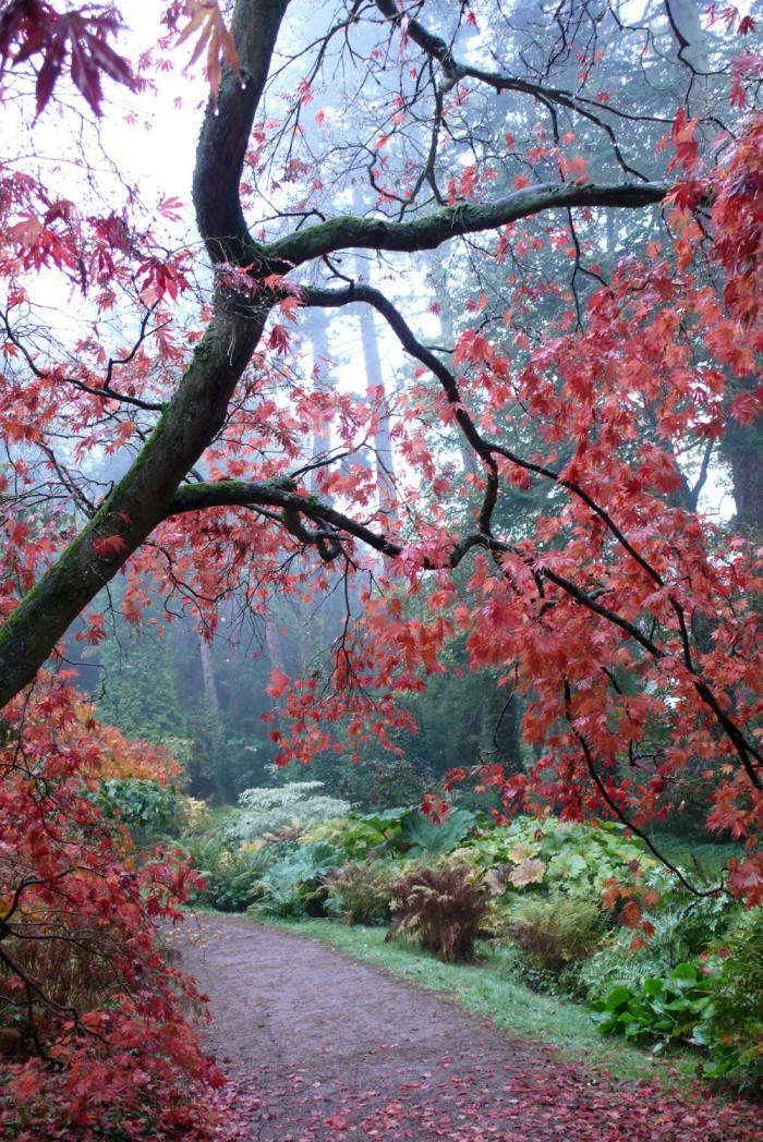 Red-Fall-Leaves-Sparse-Tree-Autumn-Rain-Batford