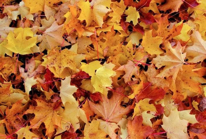 Yellow-Orange-Pile-Autumn-Leaves