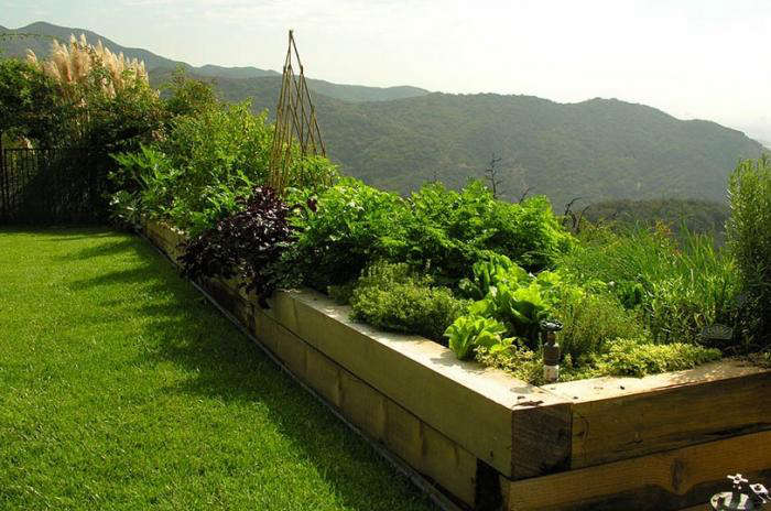 edible-garden-raised-beds-turf-lawn-pam-rownak