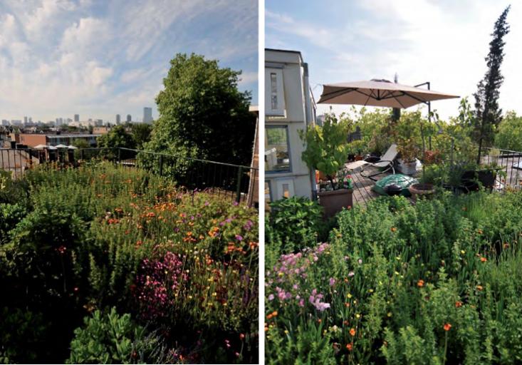 rotterdam-netherlands-roof-garden-meadow-wildflowers-astrid-holzer-gardenista