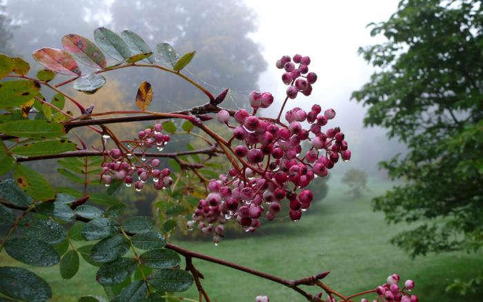Sorbus hupehensis &#8