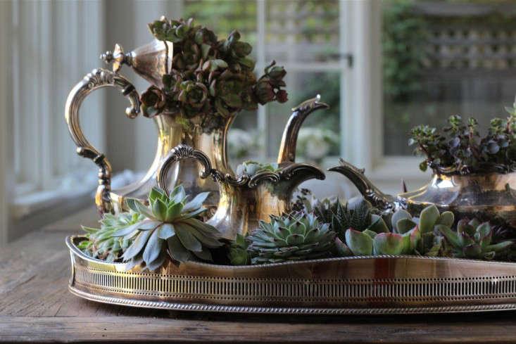 diy-succulents-silver-teapot-halloween-michelle-slatalla-2