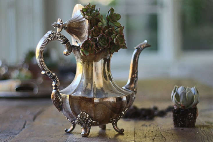 Don&#8\2\17;t polish your silver service: the more tarnish, the moodier the result when you perch succulents in a teapot, creamer, or tray. Photograph by Michelle Slatalla.