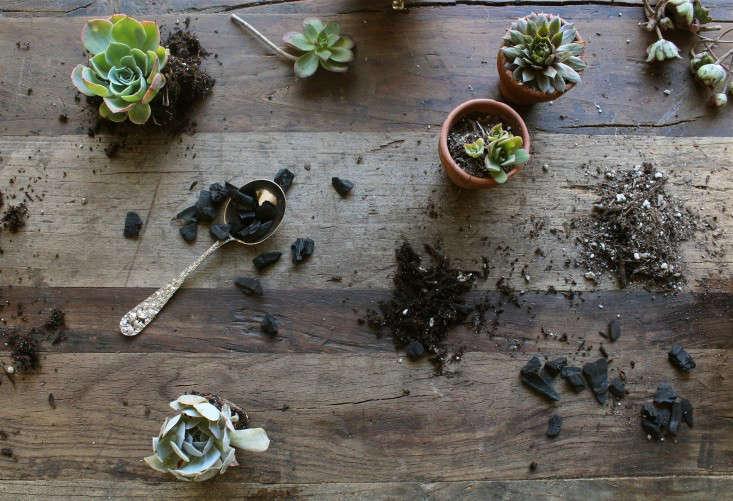 diy-succulents-silver-teapot-halloween-michelle-slatalla-6
