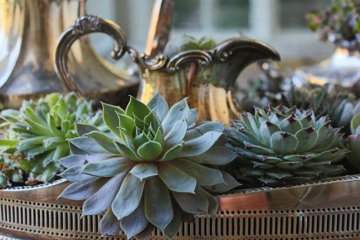 diy-succulents-silver-teapot-halloween-michelle-slatalla-7