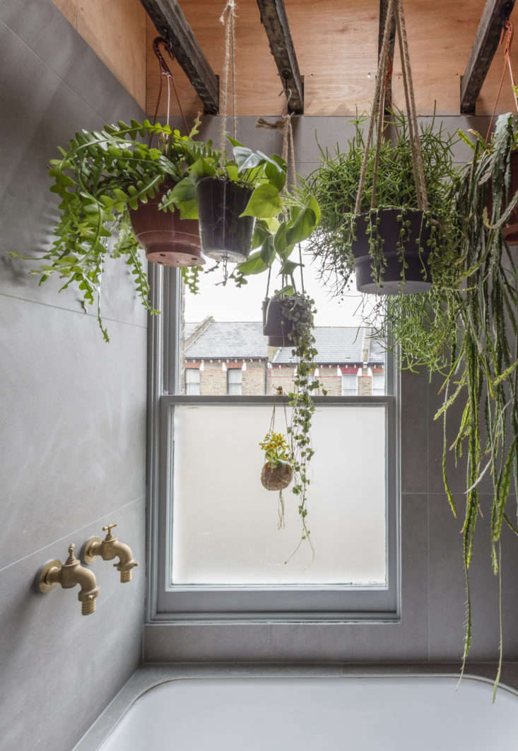 """Ferns, succulents, and other moisture-loving plants hang from the existing ceiling joists in a bathroom. Explains London architect Simon Astridge, """"The idea was to bring the outdoors in and make the space feel relaxing.""""Photography by Nicholas Worley, courtesy of Simon Astridge Architecture Workshop."""