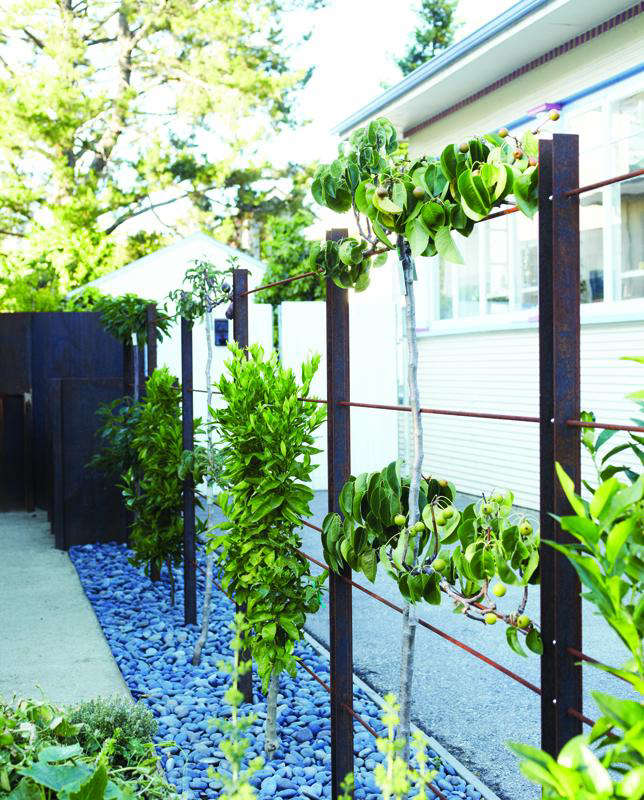 begd-living-edible-fence-p-71-photo-credit-david-fenton