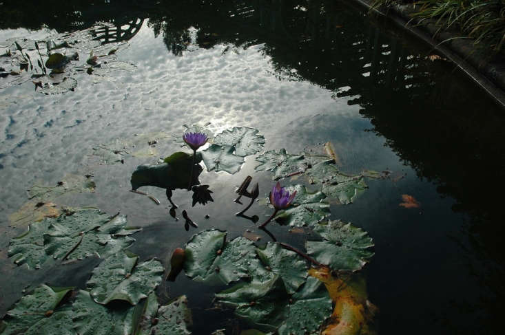 Lily pads on the pond. Photograph by Steve Moscowitz via Flickr.