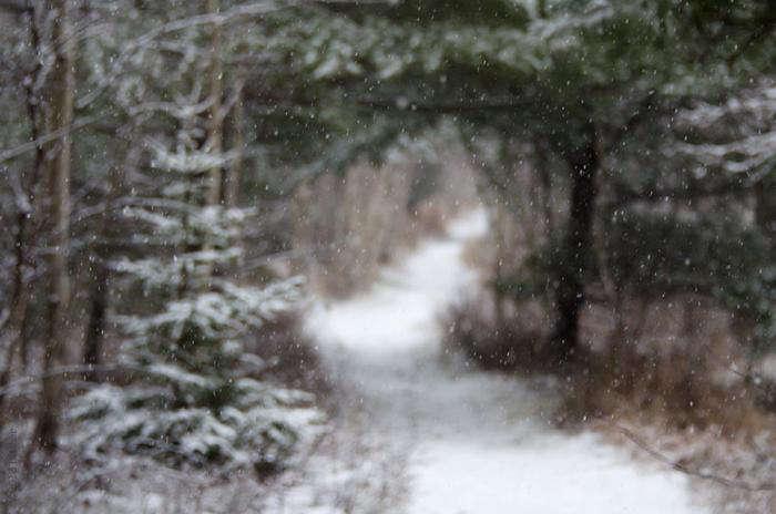 snowy-path-maine-jessup