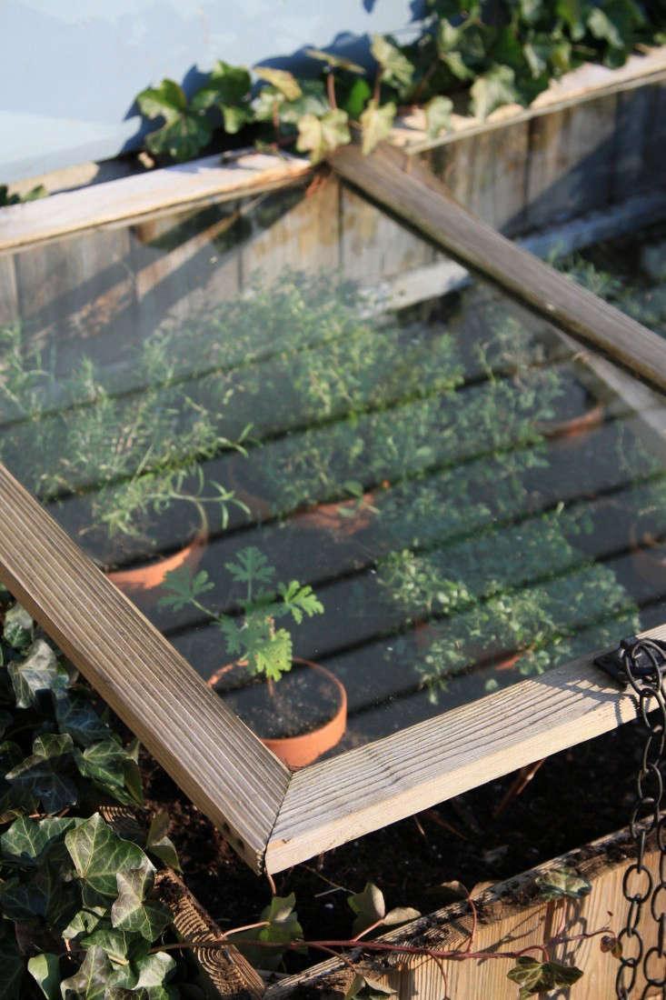 cold-frame-herbs-2-gardenista-733x1100