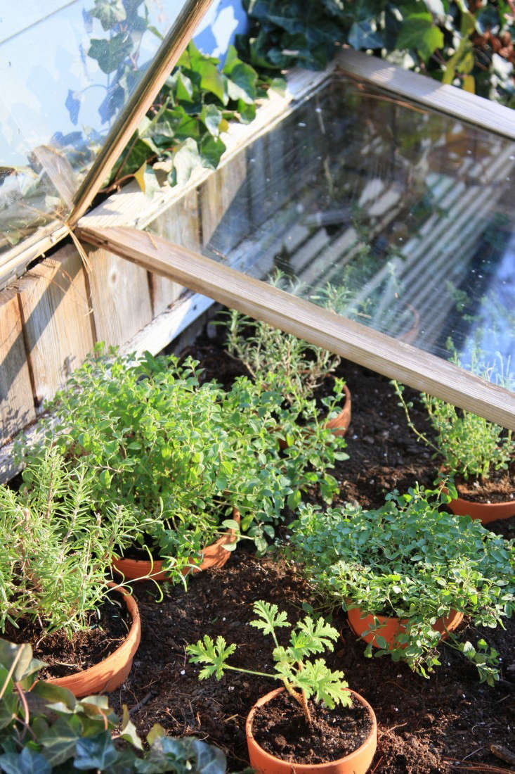 For tender plants, like herbs, consider &#8