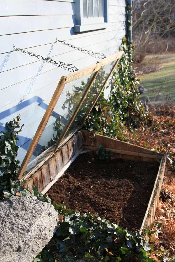cold-frame-herbs-9-gardenista-733x1100