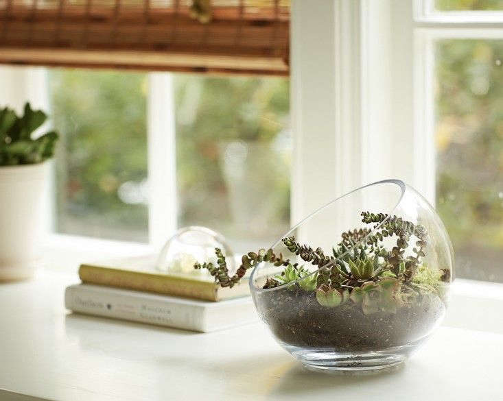 For more, see DIY: How to Plant an Open Terrarium. Photograph by John Merkl.