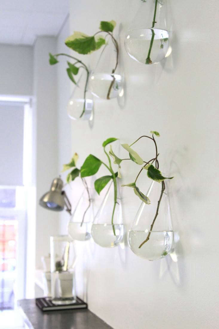 For more, see DIY: A Living Wall for the Office. Photograph by Erin Boyle.