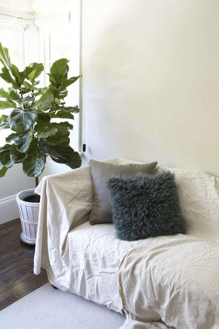 Fiddle leaf fig tree by Katie Newburn for Gardenista.
