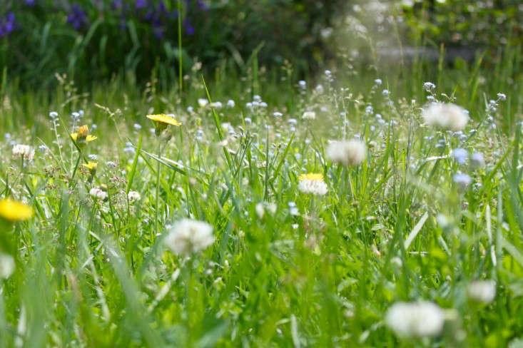 clovers-justine-hand-gardenista