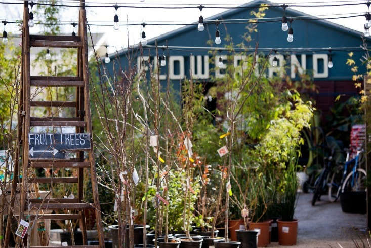 A favorite neighborhood nursery in Albany, CA. Photograph by Liesa Johannssen, from Shopper&#8