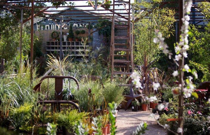 flowerland nursery flowering trees-