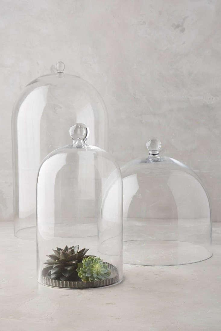 10 Easy Pieces Glass Cloche Terrariums Gardenista