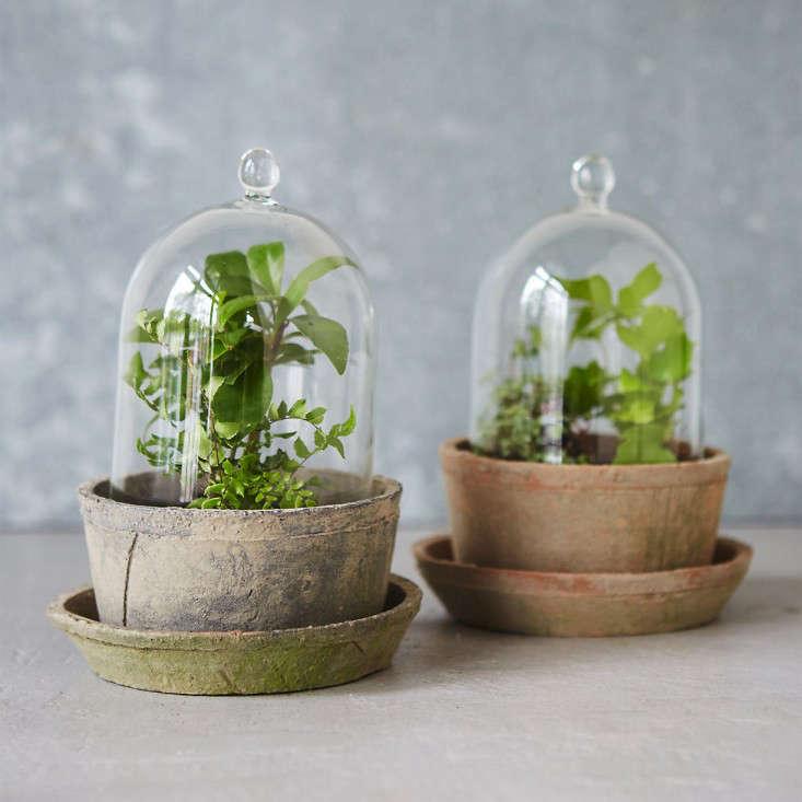 glass-cloche-terrarium-terrain-gardenista