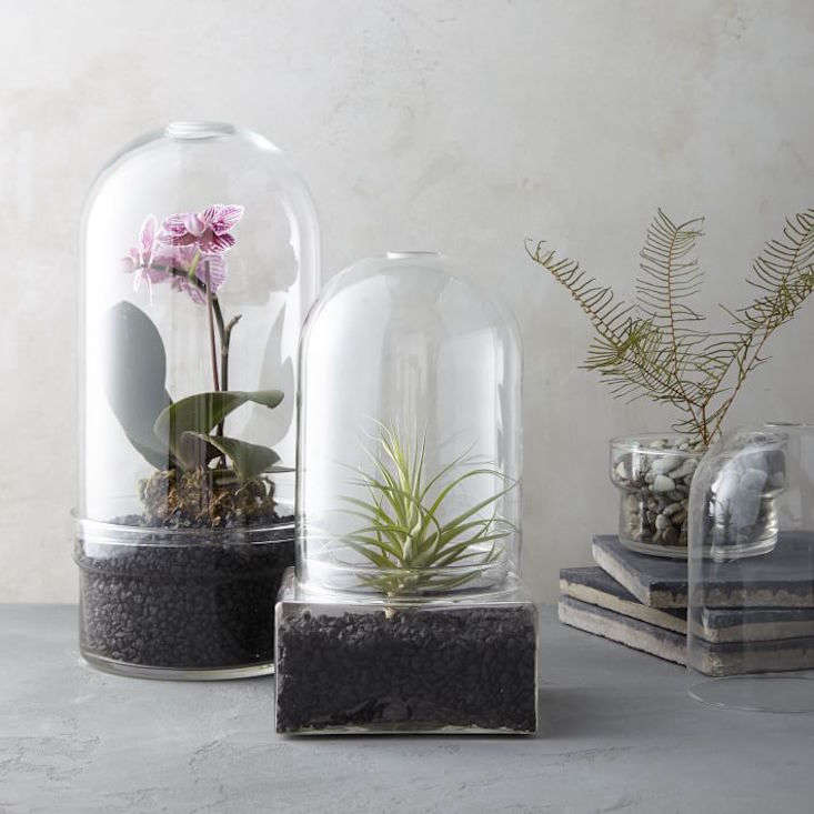 glass-cloche-terrariums-west-elm-gardenista