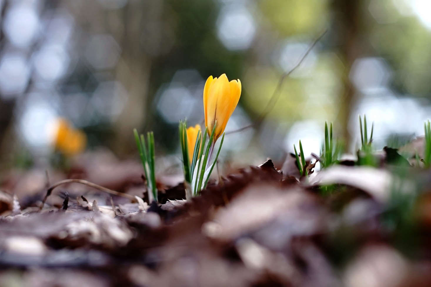 For now we thank those tiny cup-shaped flowers for making late February and early March bearable. Photograph by Takashi .M via Flickr.