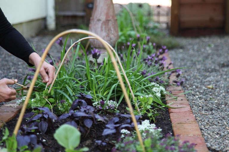 Home-Depot-Edible-Garden-Gardenista-12-768x512