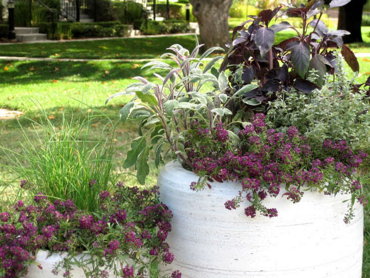 herbs flowers b