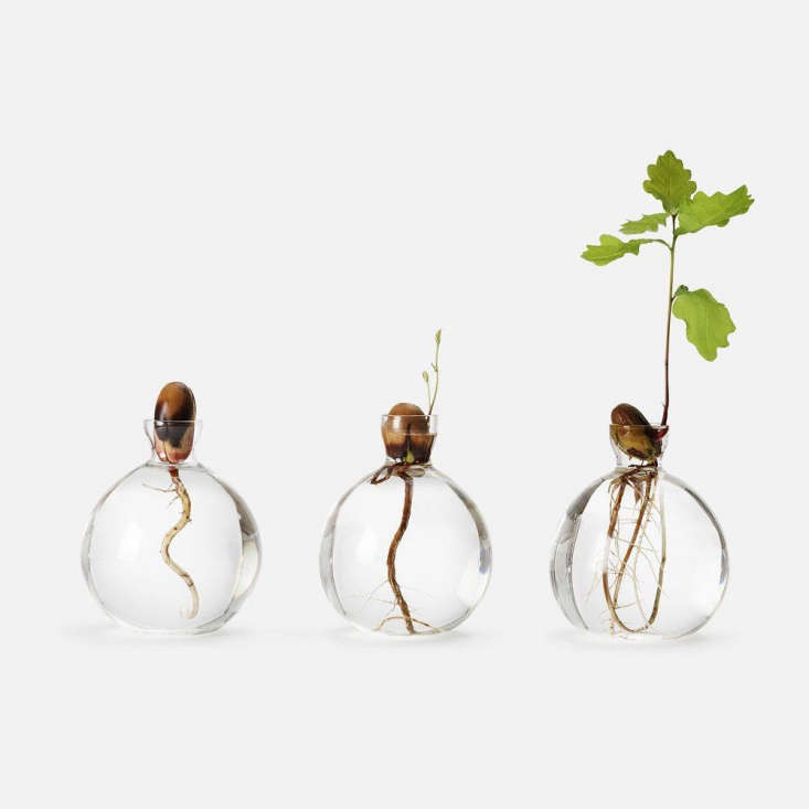 When Scandinavian designer Estrid Ericcson got the idea in the \1930s to germinate acorns in a vase, he created a bulbous glass beaker with a narrow neck. The small opening in the Acorn Vase is useful for arranging a wildflower stem or two just so; \$\16via Svenskt Tenn.