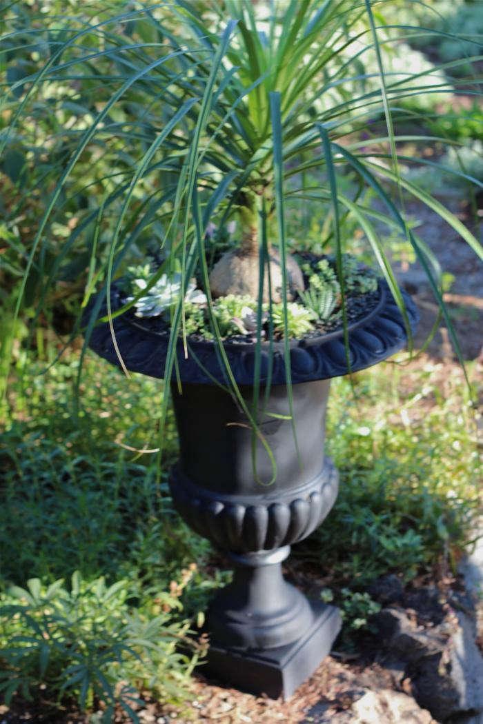 diy-black-planters-1-gardenista