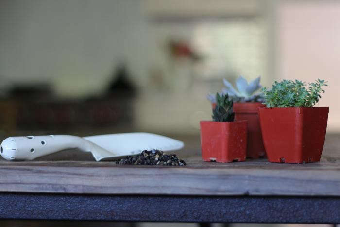 diy-black-planters-2-gardenista