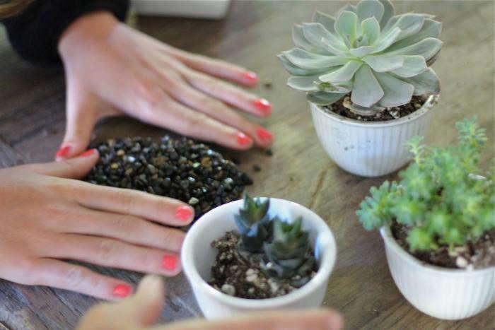 diy-black-planters-3-gardenista