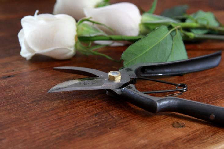 Pruner maintenance depends on which brand you own. A pair of Tobisho Handmade Pruners A-Style is \$99.90 from Hida Tool. They&#8\2\17;re made of carbon steel, so they need more care than stainless steel (but we think all pruners enjoy a little attention).
