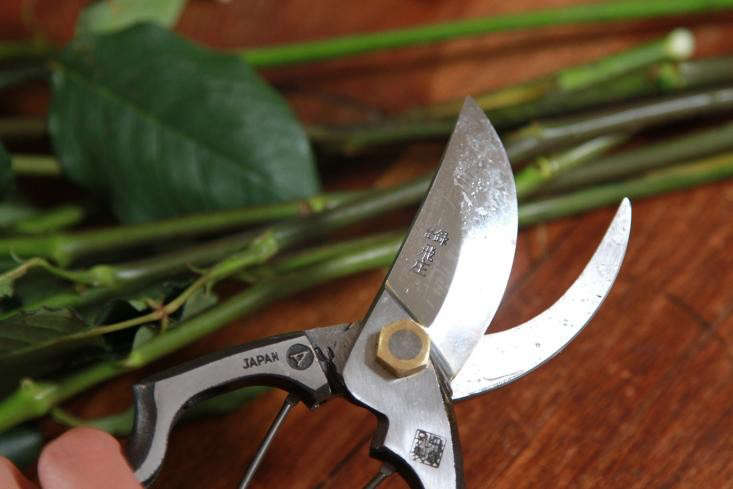 Get in the habit of giving your pruners a good wash after each use. If I make only a few snips I&#8\2\17;m sometimes tempted to forgo washing—but cutting even one stem can leave sap and plant residue that will damage pruners in the long run.