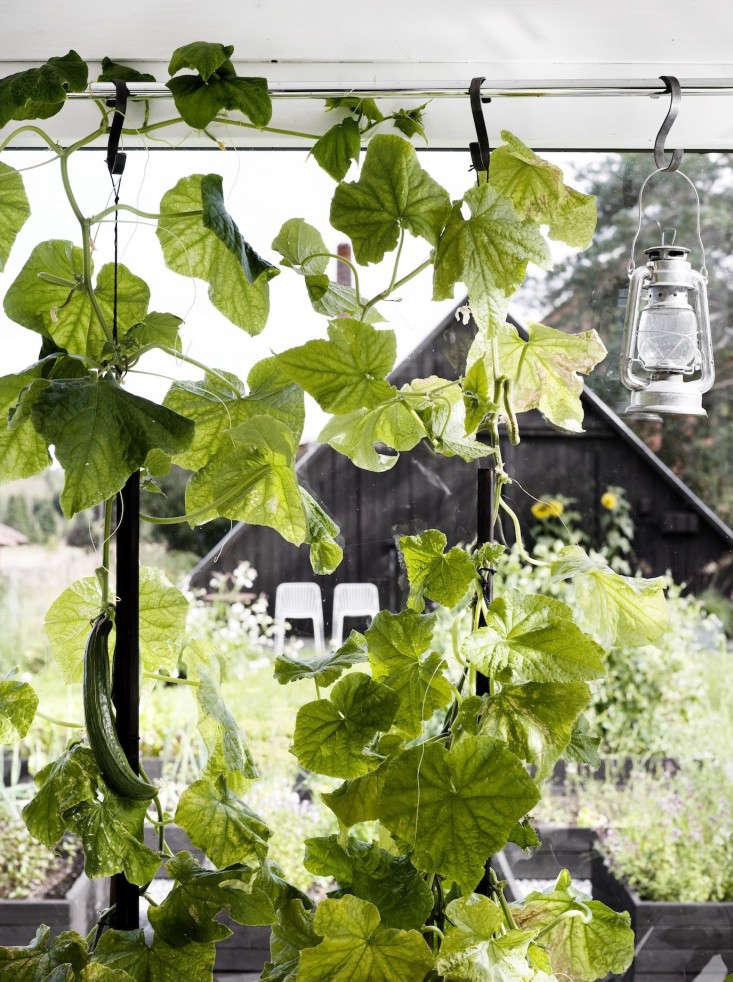 black-white-orangery-outbuilding-gardenista-squash
