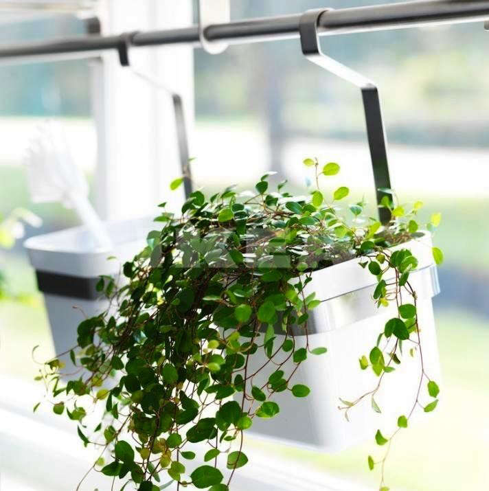 Creative indoor planters.