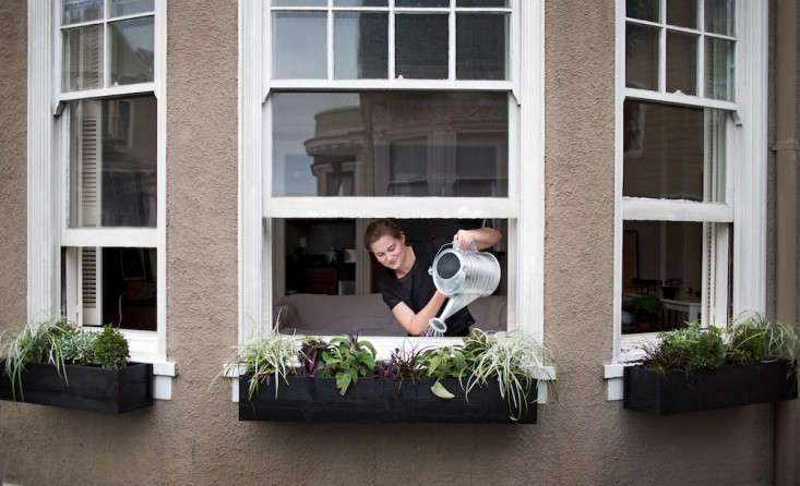 meredith-swinehart-watering-black-window-boxes-with-galvanized-can