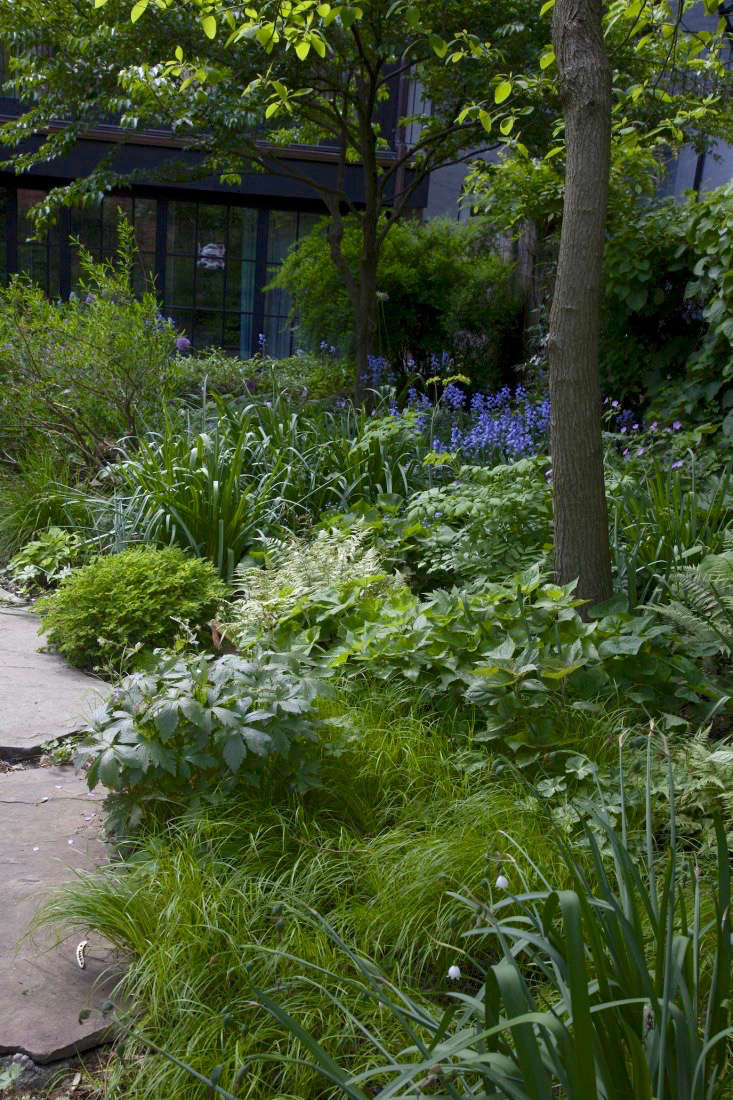 brooklyn-backyard-garden-maria-robledo-gardenista